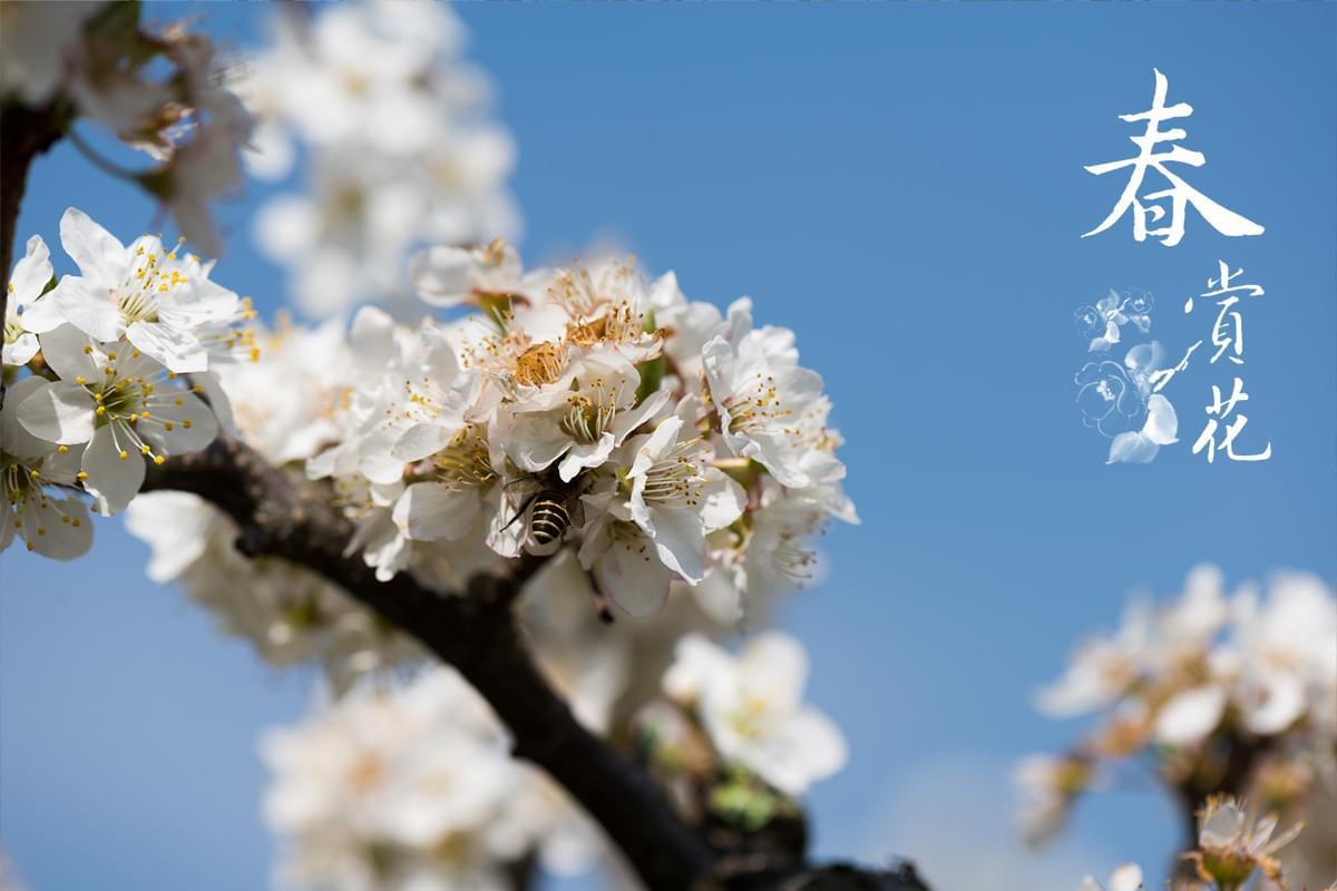梨山四季-春