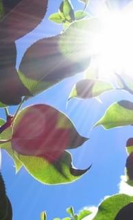 中愛水蜜桃玩樂在梨山