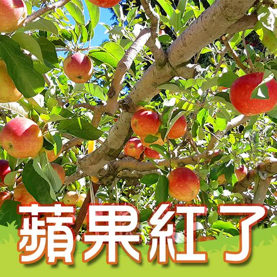 10月蘋果紅了 採蘋果專案 住宿$3180起~
